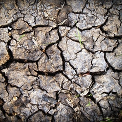 cracks in dry land