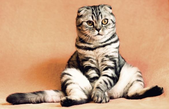6 Common Cat Digestive Problems and What to Do About Them