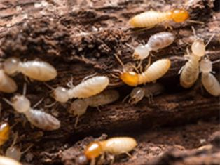 Pest Lifecycles and Other Interesting Facts