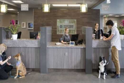 Taking a Look Inside the Veterinarian's Office