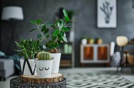 Tips for Caring for Low Light Indoor Plants