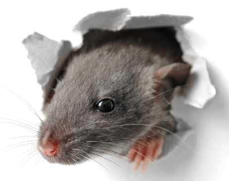 7 Signs Your Home Has a Pest Infestation