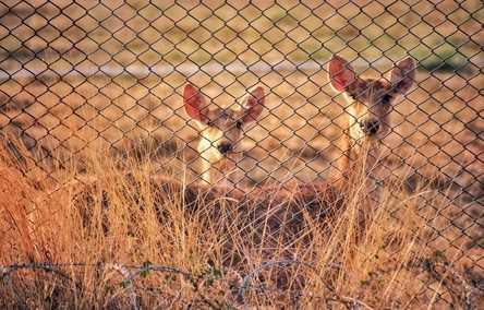 Top 5 Deer Fence Ideas