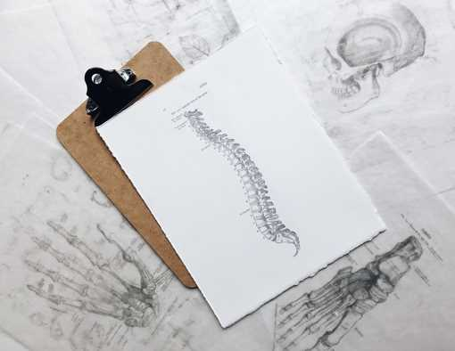 Can Chiropractics Help Cervical Spondylotic Myelopathy